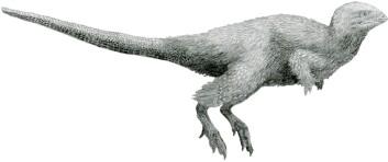 Denne krabaten heter kulindadromeus, og er blitt funnet i Sibir. Selv om den har rovdyrlignende armer, har den helt klart noe som ligner på fjær. Det stemmer dårlig overens med øglebein og fuglebein-hypotesen. (Foto: (Illustrasjon: Tom Parker / CC BY-SA 4.0))