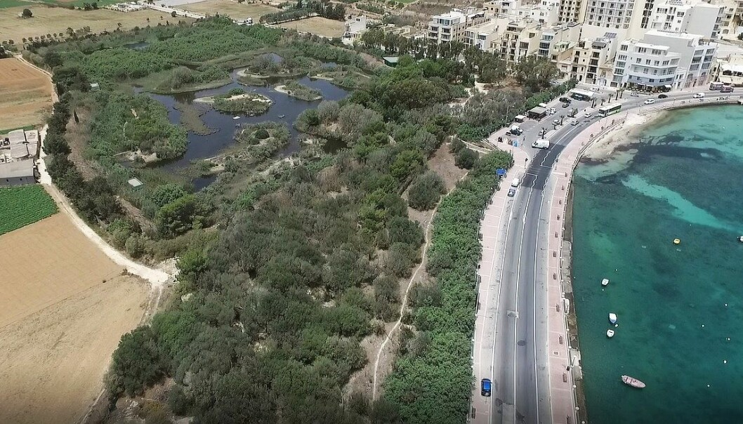 Is-Simar er lite og ligger idyllisk til innerst i St. Paul's Bay. På 80-tallet ble området delvis brukt som søppelplass, men nå er det kanaler, øyer og et yrende fugleliv her. (Foto: BirdLife Malta)
