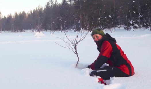 Når nettene er lange: Hva driver planter og botanikere med om vinteren?