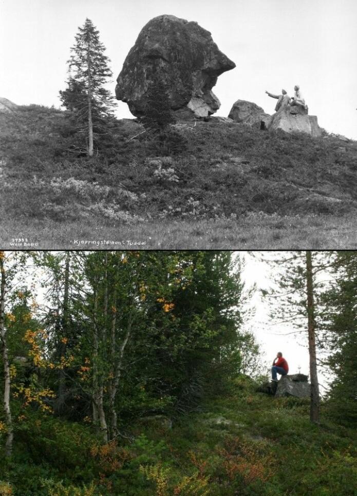 Kjerringsteinen i Tuddal ble gjemt og glemt mellom kratt og trær. Det øverste bildet er fra 1931. Nederst et bilde fra 2008. (Foto: Anders Beer Wilse, Norsk Folkemuseum og Oskar Puschmann, Skog og landskap, lastet ned fra Tilbakeblikk.no, CC BY-NC-ND 3.0)