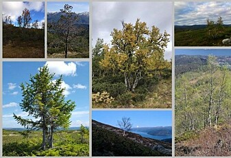 Vil du hjelpe skogforskerne?
