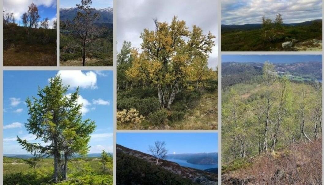 Her er noen av bildene tur-folk allerede har sendt inn til skogforskerne. (Foto: Natur i endring. Montasje: Eivind Torgersen)