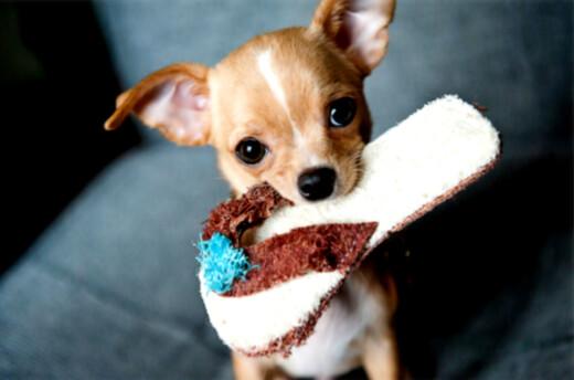 Hvorfor søte dyr gjør oss tullete