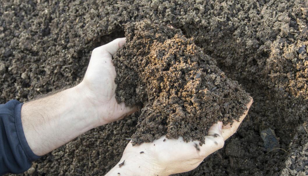 Nanojern renser forurenset jord ved å bryte de sterke bindingene mellom klor og karbon, som finnes i mange av de farligste miljøgiftene. Denne teknologien blir allerede tatt i bruk i USA, og stadig flere europeiske land følger etter. (Foto: Erik Joner)