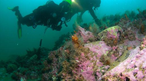 Kronikk: Ny forskrift setter vitenskapelige dykkere på land