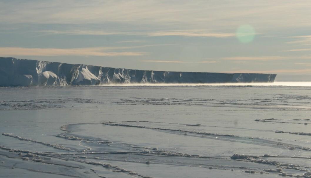 Isklippene rundt Antarktis kan bli flere hundre meter høye. Hvilken effekt har det på klimaet når de smuldrer opp og faller ut i havet? (Foto: Mark Brandon)