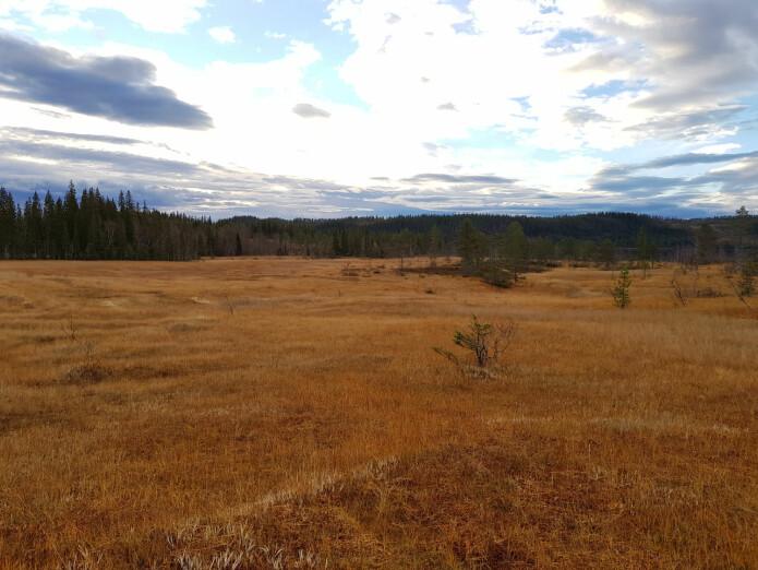 I Norge og andre land i nord på den nordlige halvkule, finner vi store områder med myr. Disse fungerer som karbonlager og gjør best nytte for seg om de forblir uberørt. (Foto: Magni Olsen Kyrkjeeide)