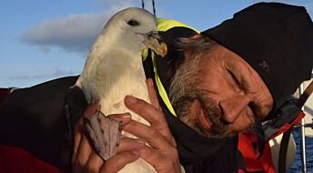 Slik bidrar fugleinteresserte Asgeir Larsen til vitenskapen
