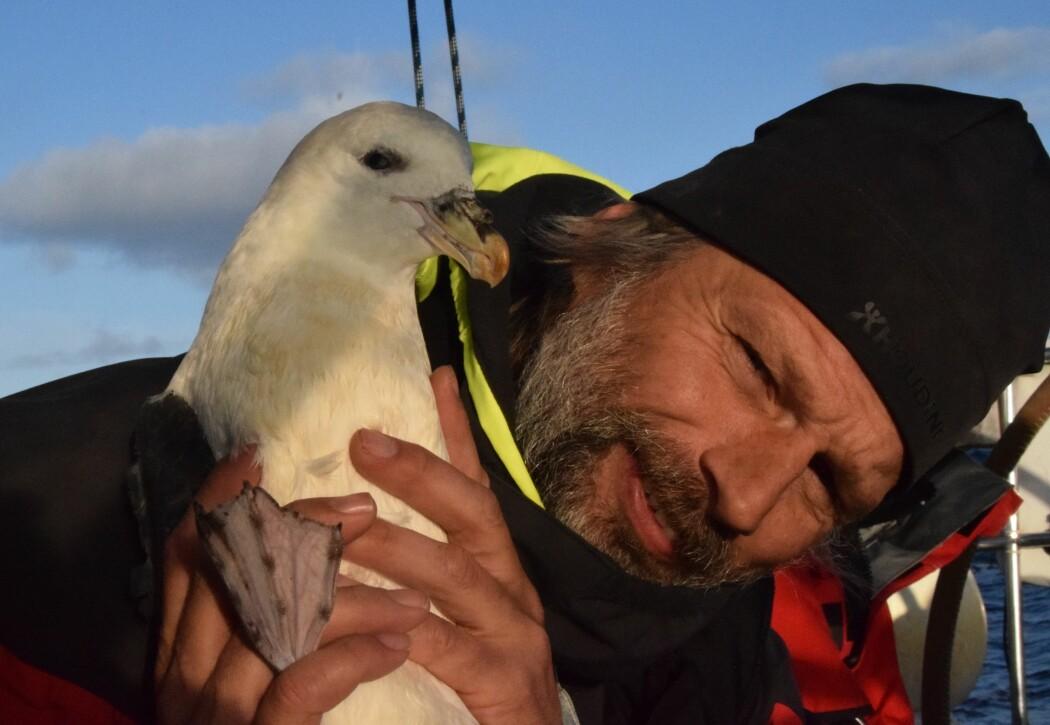 Asgeir Larsen er ikke forsker. Likevel bidrar han til vitenskapen ved å melde inn observasjoner han gjør av sjeldne fugler på ulike steder i Norge. Her er han i selskap med en havhest. (Foto: Per Arne Skjeggestad. Lisens: Copyright)