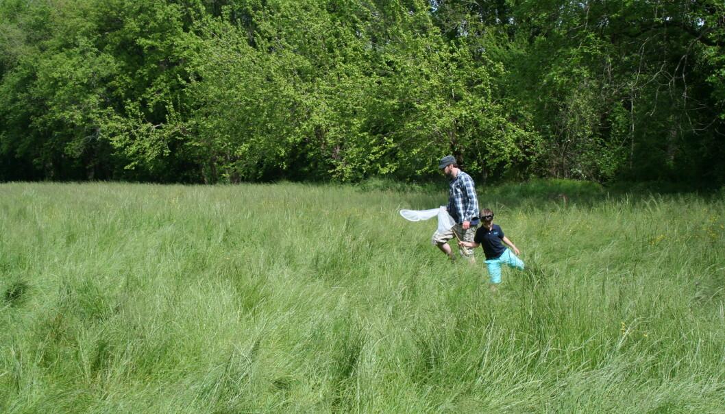 Grasrotforskere på tokt for å finne insekter en varm sommerdag. (Foto: Ragnhild Grotli Ulseth, Lisens: CC BY 4.0)