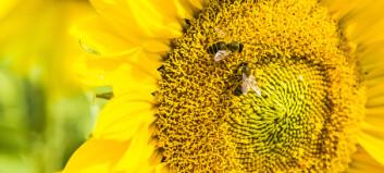 Skjønner bier pluss og minus?