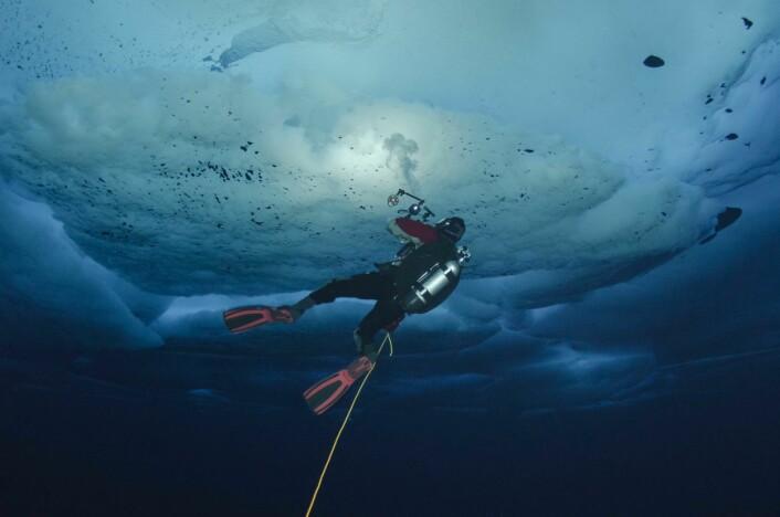 En vitenskapelig dykker fotograferer dyr under drivis i Polhavet på en ekspedisjon ledet av Norsk Polarinstitutt. (Foto: Peter  Leopold / Norsk Polarinstitutt)
