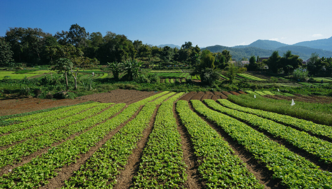 Tre fjerdedeler av verdens økologiske jordbruk foregår i lavinntektsland. Denne økologiske gården ligger i Laos. (Foto: Sam Spicer/Shutterstock/NTB scanpix)