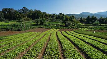 Her er fordelene og ulempene ved økologisk frukt og grønnsaker