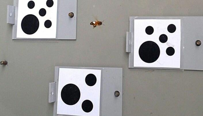 Her er bilde fra en test som forskerne har gjort før. (Foto: Scarlett Howard)