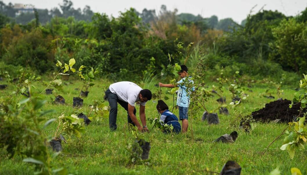 Aktiv treplanting er blant tiltakene som har gjort India og Kina grønnere. (Foto: Chandan Khanna, AFP / NTB Scanpix)