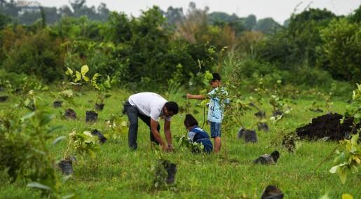 Kina og India har gjort jordas overflate betydelig grønnere