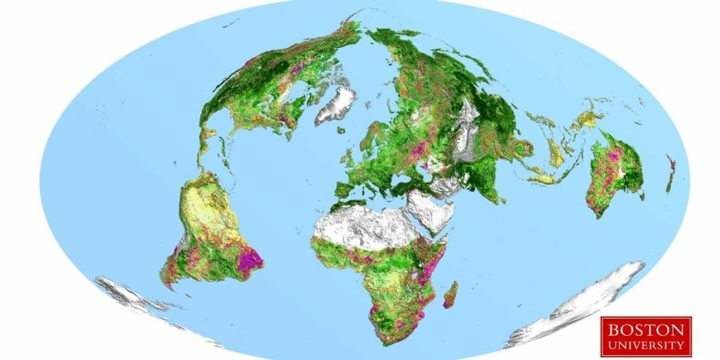 Kartet over kloden viser at Kina og India i stor grad bidrar til at jordas overflate er blitt betydelig grønnere siden tusenårsskiftet. (Foto: Boston University)
