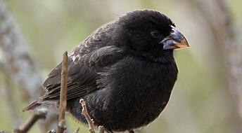 Hva er sant og hva er usant om Darwins finker på Galápagos?