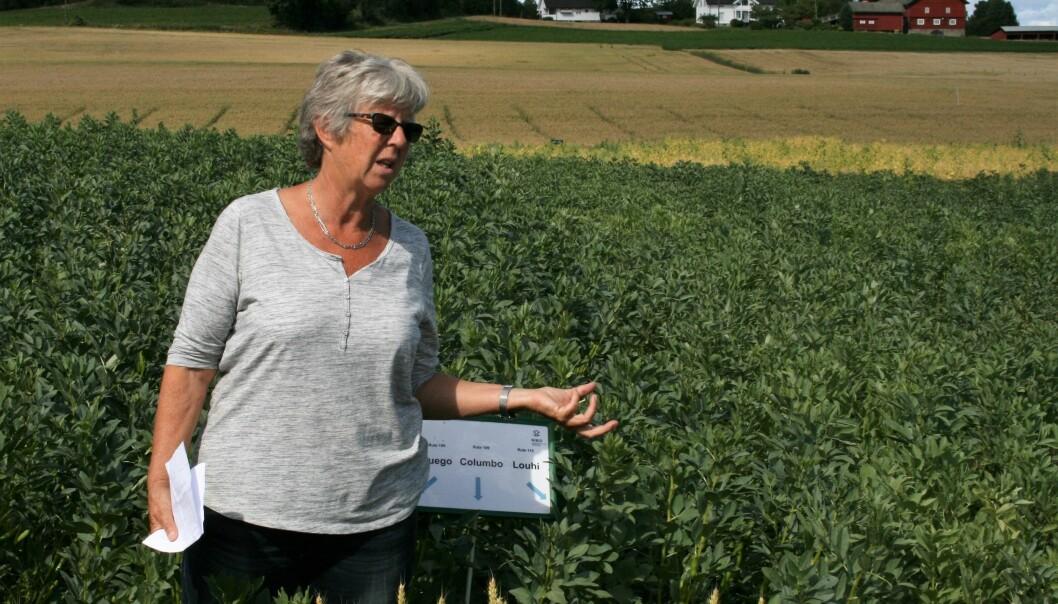Forskeren Unni Abrahamsen mener at vi bør produsere så mye planteprotein som mulig her i landet. (Foto: NIBIO)