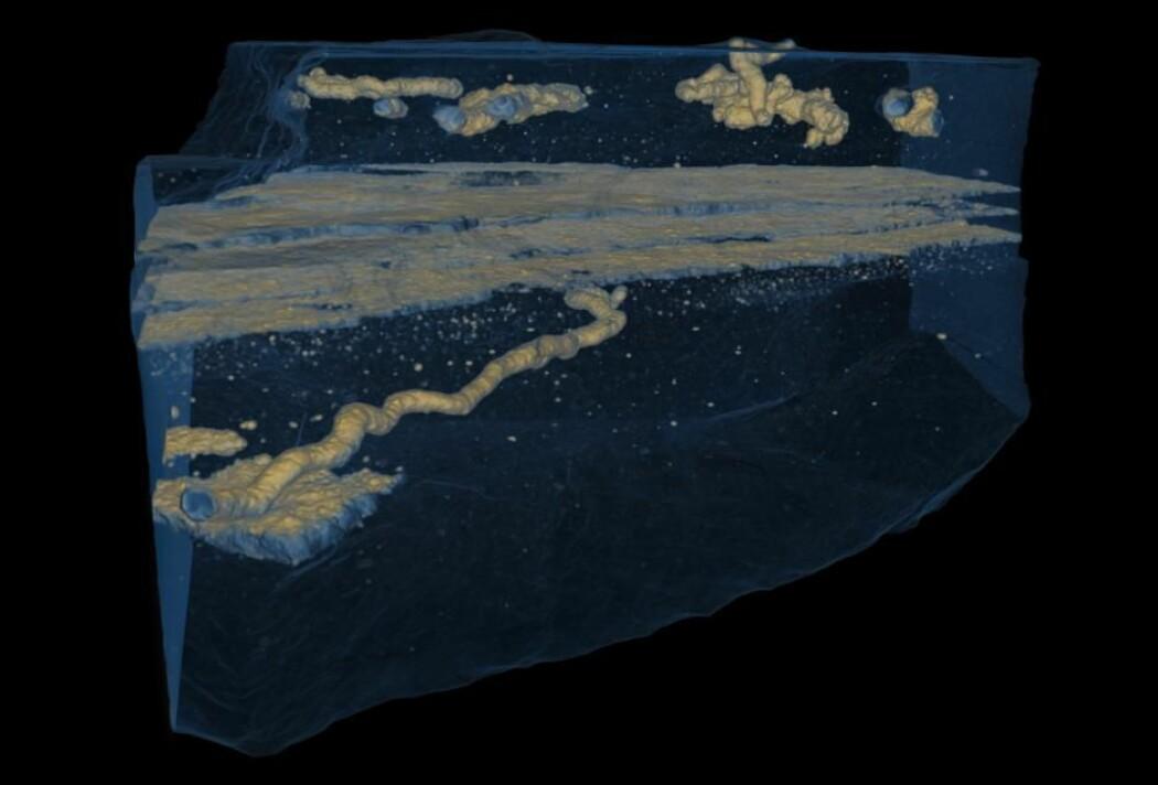 3D-konstruksjon av gjennomsiktige ganger gravet for 2,1 milliarder år siden, skapt gjennom røntgenskanning. (Illustrasjon: Albani et al., 2019)