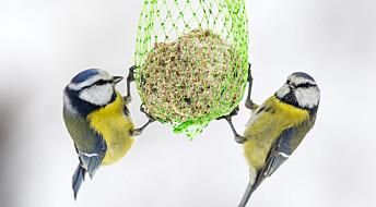 De som kikker på småfugler har bedre mental helse