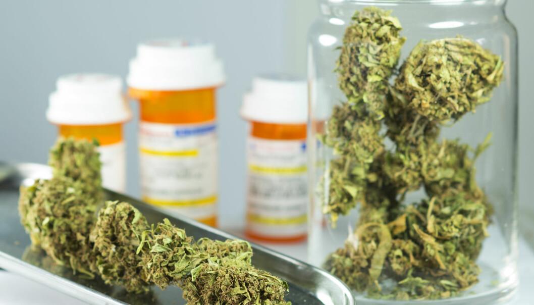 Medisinsk cannabis finnes i utlandet som både mat (for eksempel kake), drikke (for eksempel brus), oljer og planter. Man kan enten innta det eller inhalere gjennom e-sigaretter eller på mer konvensjonelt vis. (Foto: william casey / Shutterstock / NTB scanpix)