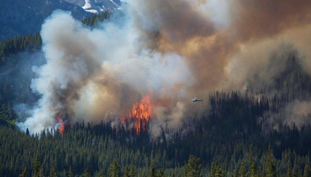 En ny studie viser at trær med tykk bark er bedre rustet mot framtidige skogbranner.  (Illustrasjonsfoto: Sky Light Pictures / Shutterstock / NTB scanpix)