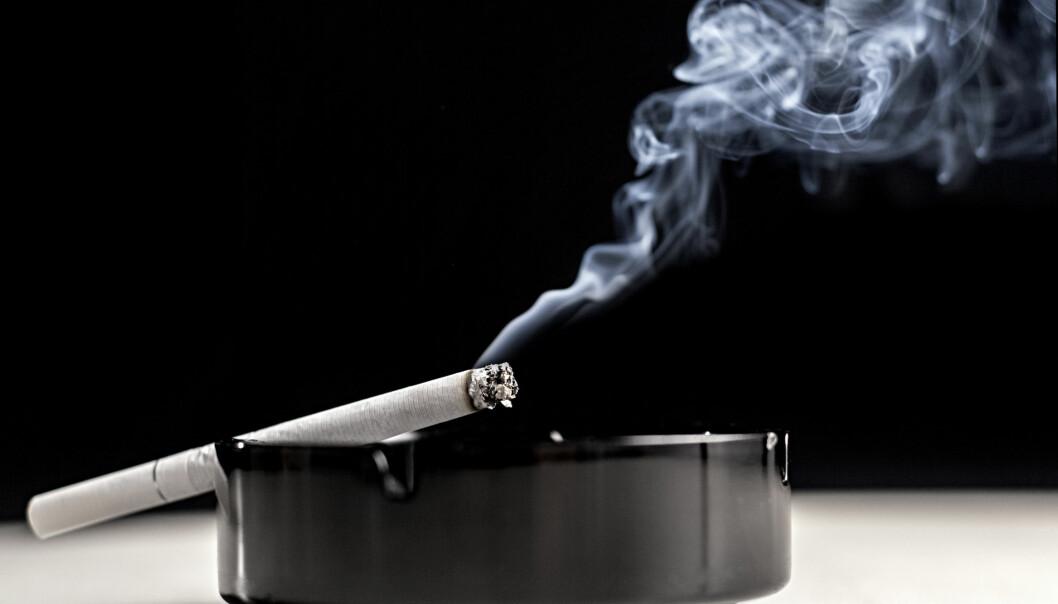 Forskere har laget en genmodifisert plante som fungerer som luftrenser og fjerner stoff som benzen fra tobakksrøyk. (Foto: iStock)