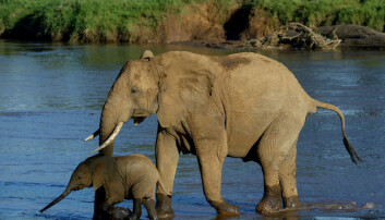 Spiser vi opp de store dyrene i verden?