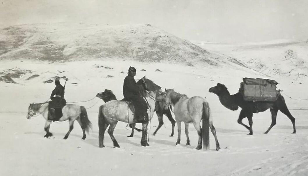 Dette er eitt av dei 10 000 fotografia  i Mamen-samlinga som Kulturhistorisk museum overtar. Oscar Mamen var ein norsk eventyrar som saman med kjærasten sin, antropologen Ethel Lindgren, tok bilete av folk og dyr i Mongolia mellom 1924 og 1932. (Foto: Oscar Mamen)