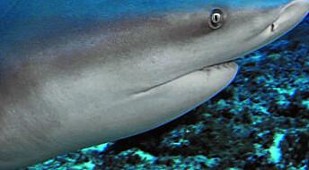Hvordan ta ut den ene haien som dreper mennesker?