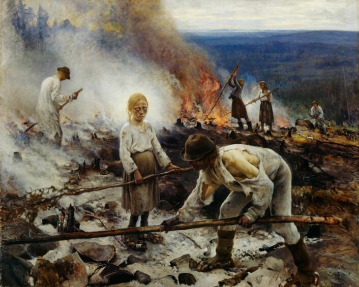 På 1600- og 1700-tallet økte hyppigheten av skogbranner dramatisk. I gjennomsnitt gikk tiden mellom hver skogbrann ned fra 73 til 37 år. Mange av brannsårene i årringene var dessuten tidlig i treets vekstsesong, noe som praktisk talt ikke forekom i den tidlige perioden. Dette sammenfaller med menneskets bruk av brann for å bedre beiteforholdene for husdyra og svedjebruk eller bråtebrenning der de kunne dyrke rug og nepe. Slikt svedjebruk var fremdeles vanlig i Nord-Finland på slutten av 1800-tallet, slik det er vist i maleriet «Trälar under penningen», av den finske kunstneren Eero Järnefelt i 1893. Maleriet henger i dag på Ateneum, Finlands nasjonalmuseum i Helsinki. (Foto: Wikimedia Commons)