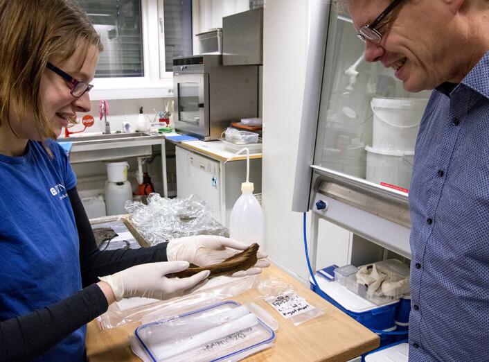 Ellen Randerz (venstre) og Ulf Fransson fra NTNU Vitenskapsmuseet, ser på lekebåten fra utgravningene på Ørland. Randerz er konservator på museet og Fransson var en av feltlederne for utgravningen. (Foto: Åge Hojem / NTNU Vitenskapsmuseet)