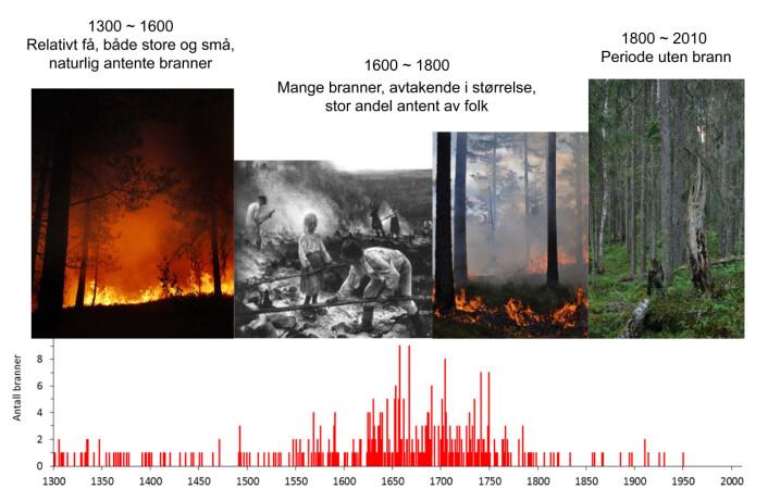 Antall skogbranner per år fra 1300 og frem til i dag innenfor et 74 kvadratkilometer stort skoglandskap i Trillemarka-Rollagsfjell naturreservat. De eldste brannene var fra før Svartedauden (1350). Resultatene avdekket et mønster der klimaet bestemte antall skogbranner frem til 1625, etterfulgt av perioder på 1600-1700-tallet med mange menneskeskapte branner. På 1800-1900-tallet avtok brannhyppigheten på grunn av forbud mot brenning i skog og utmark og økende verdi på tømmeret. (Foto: Erik Holand, Ken Olaf Storaunet, NIBIO og Jørund Rolstad, NIBIO. Maleri: Eero Järnefelt, Ateneum)