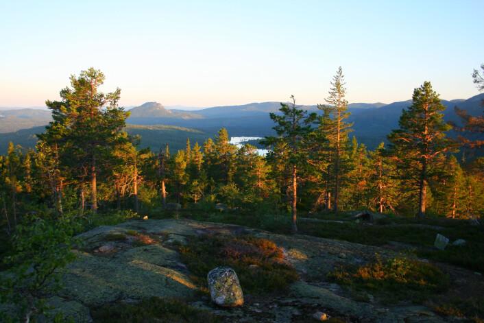 Formålet med skogreservater slik som Trillemarka-Rollagsfjell naturreservat i Buskerud er å bevare naturskogsområder som økosystem med tilhørende naturlig plante- og dyreliv og naturlige prosesser. Siden 1300-tallet har det vært flere hundre skogbranner i området. Nå er det over 200 år siden siste skogbrann av noe størrelse i Trillemarka. Her utsikt fra Heimseteråsen mot Tekslehogget. (Foto: Jørund Rolstad, NIBIO)