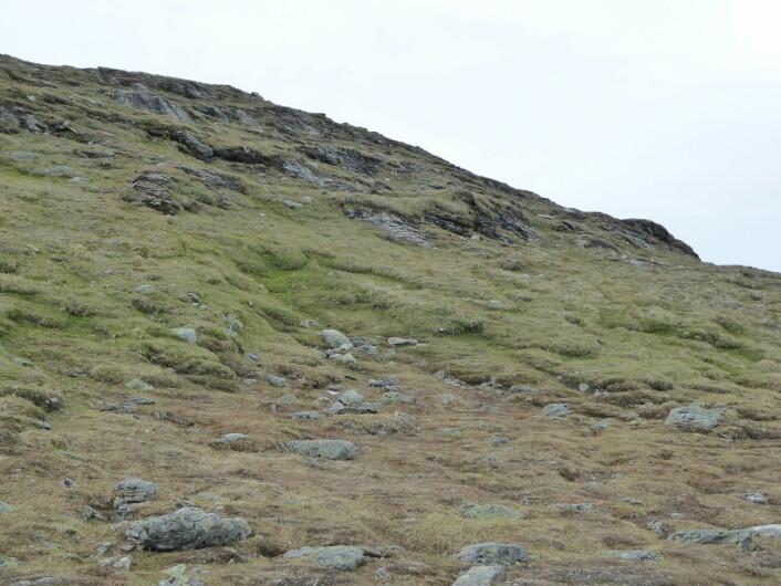Gradienten fra snøleie i bunnen til rabbe på toppen. Fjellheia er det litt grønnere beltet mellom brunt snøleie og rabbe med flekker av bart fjell. (Foto: HAU)