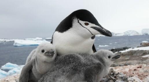 På tokt i Antarktis: Forskere skal studere dyrelivet i lite utforsket havområde