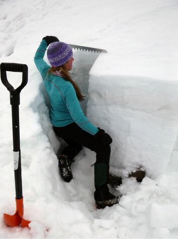 En student fra UNIS undersøker en snøgrop for å finne svake lag. (Foto: Alexander Prokop)