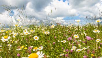 Insektene dør, men det finnes en vakker og velduftende løsning