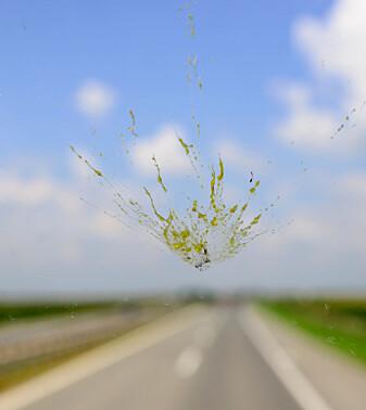 Da vi dro på biltur for noen tiår siden, ble frontruta stadig full av moste insekter. I dag skjer det nesten aldri. Er det fordi bilene er blitt mer aerodynamiske? Eller er det fordi det er så mye færre insekter å kollidere med? Ingen vet svaret, men insektforskerne frykter det siste. (Foto: trezordia / Shutterstock / NTB scanpix)