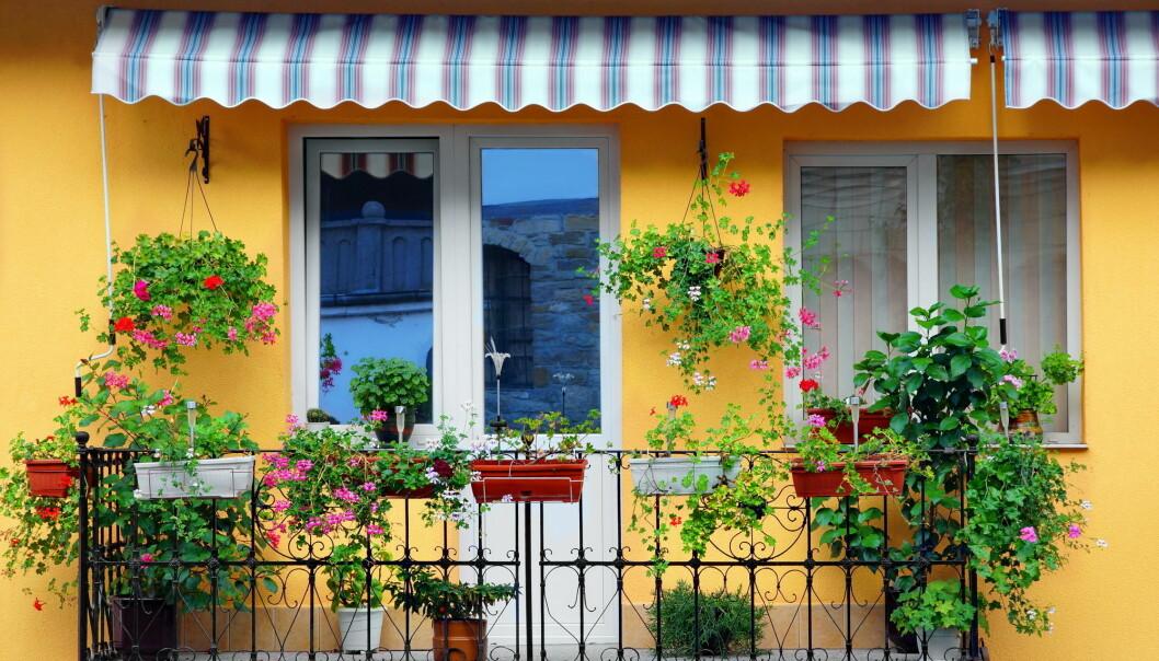 Alle monner drar. Del byen - og balkongen - med insektene! (AVN Photo Lab / Shutterstock / NTB scanpix)