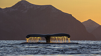 Følg kvalens utrolige reise fra Troms til de karibiske øyer