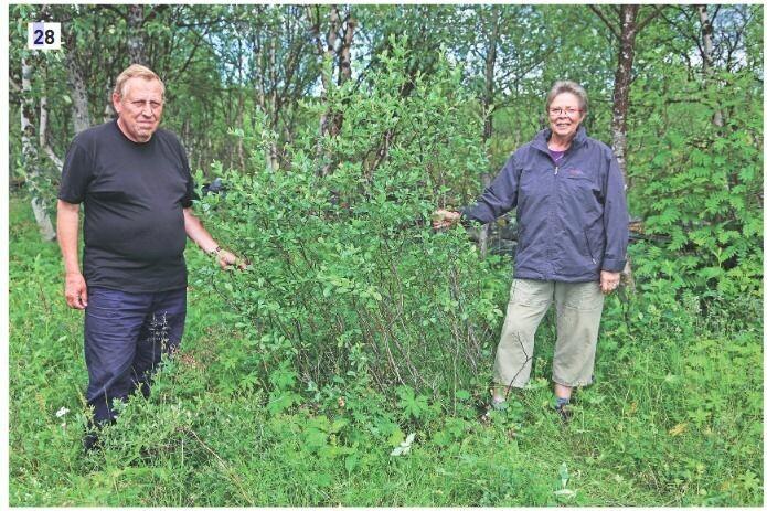 Reidar Elven og Eli Fremstad, forfatterne av boka «<i>Salix </i>– vier, selje og pil i Norge». (Foto: Jaanus Paal, CC-BY 4.0).