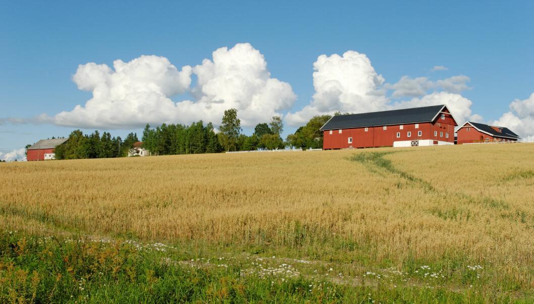 Hva skal til for å gjøre store endringer i norsk landbruk? Til tross for regjeringsskifte, har det ikke skjedd store endringer, mener forskere. Har ikke landbrukspolitikere makt nok til å gjennomføre endringene? (Illustrasjonsfoto: Stanislav Sokolov / Shutterstock / NTB scanpix)