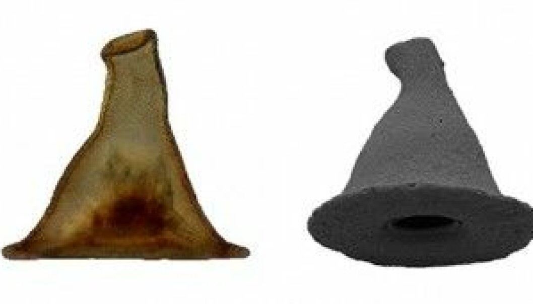 Amøben Arcella gandalfi er oppkalt etter Tolkien-trollmannens hatt.  (Foto: Jordana C. Féres & Alfredo L. Porfírio Sousa)
