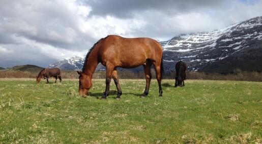Hester trenger ikke påkledning i vårsola
