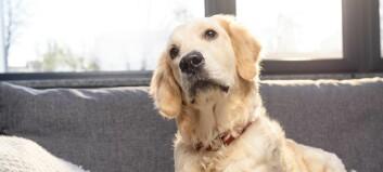 Ser hunder hva som skjer på TV?