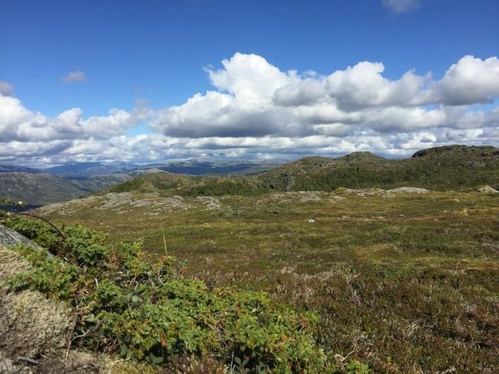 Ser du det samiske landskapet? Ja? Nei? Hvis nei, betyr det at du kan være sikker på at det ikke er et samisk landskap? Foto: Håkon Hermanstrand