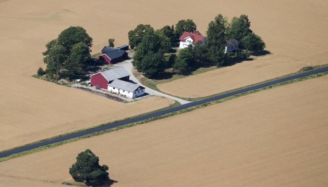 Gressavlingene på Østlandet falt i fjor med mer enn halvparten fra året før. Potetavlingen økte på sin side til tross i tørkesommeren. (Foto: Berit Roald / NTB scanpix)